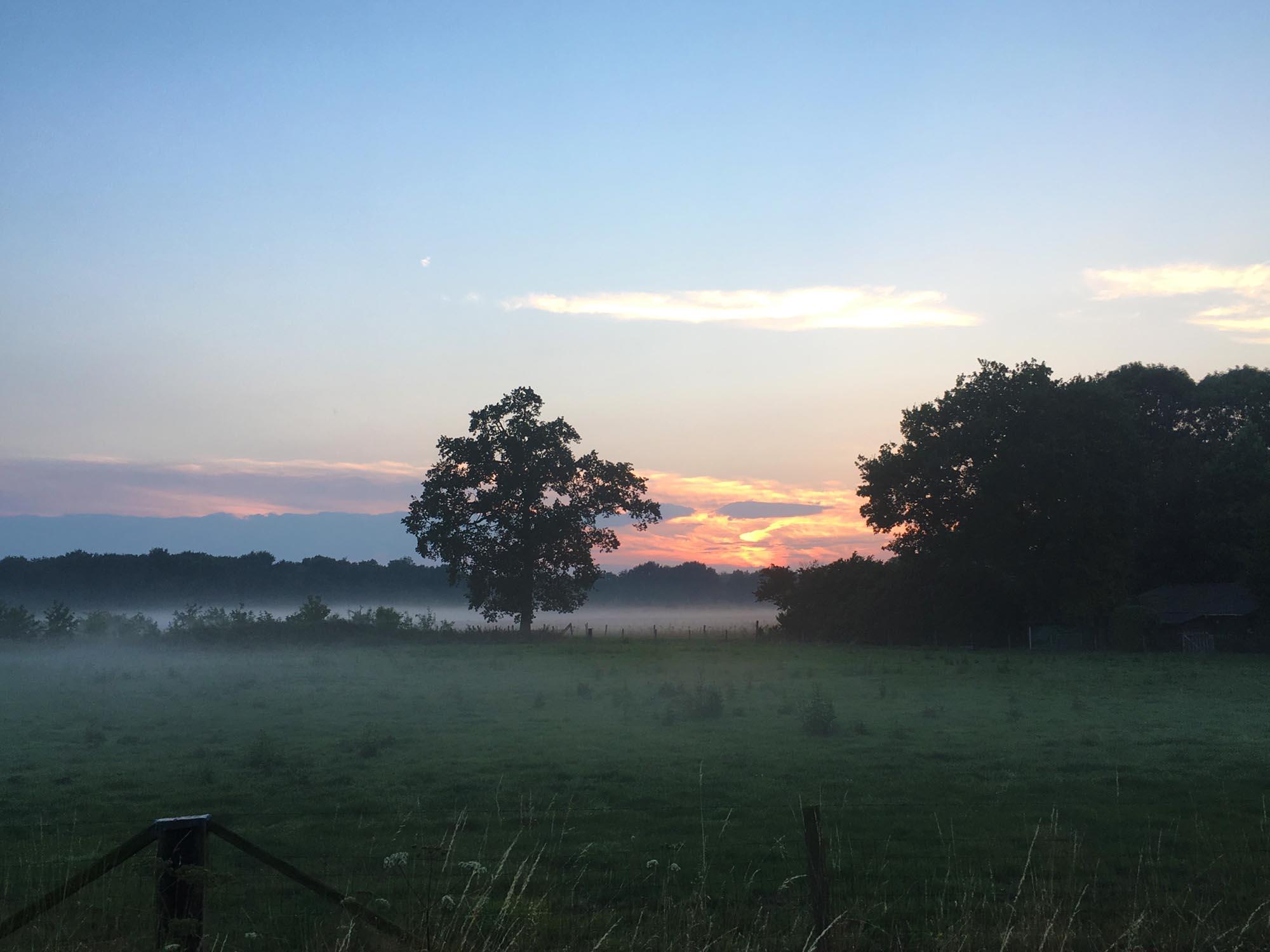 natuur qigong bos zonsondergang wolken weide