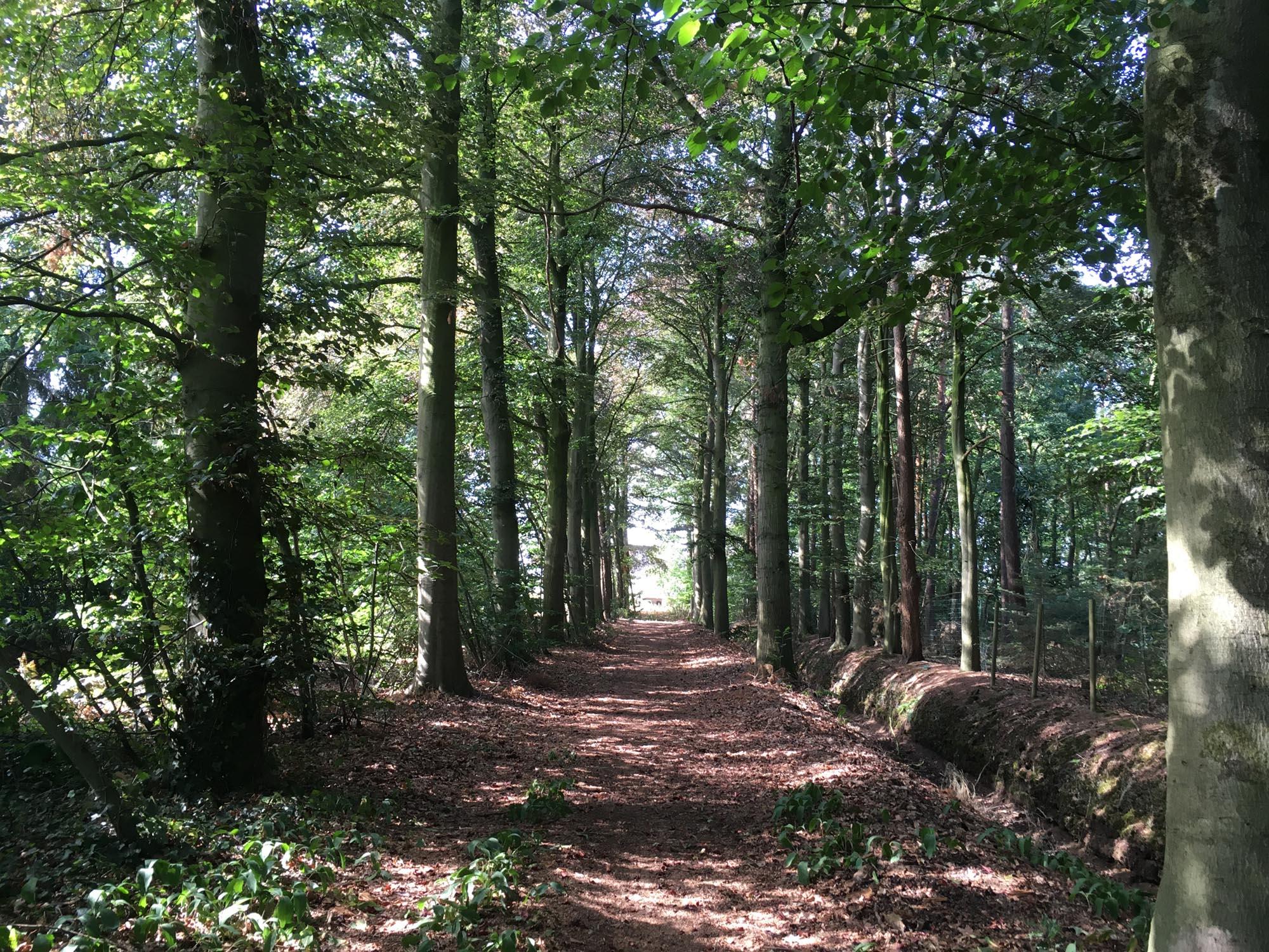 natuur qigong wandelen in de natuur bospad