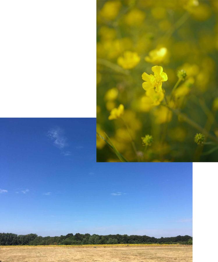 bloemen lucht natuur qigong